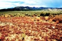 Colored Desert