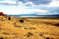 Yellow Desert