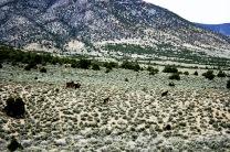 PE Rd, Wild horses 2